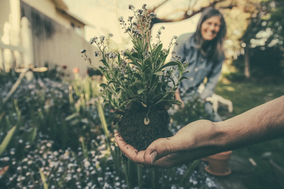 20 Money Saving Tips for Gardening